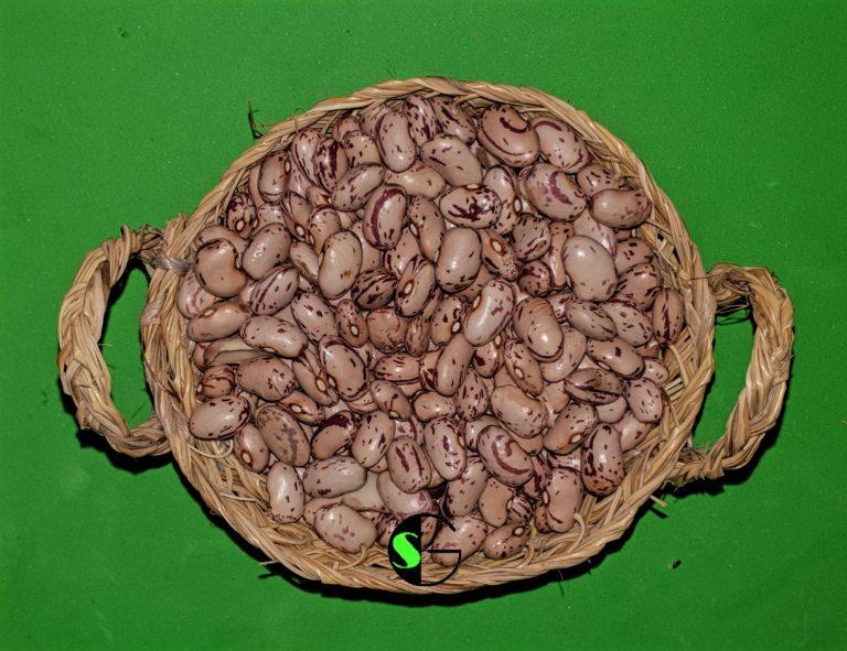 Alubias a granel pinta de León